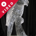 Parrot  Ice Sculpture by Passion for Ice