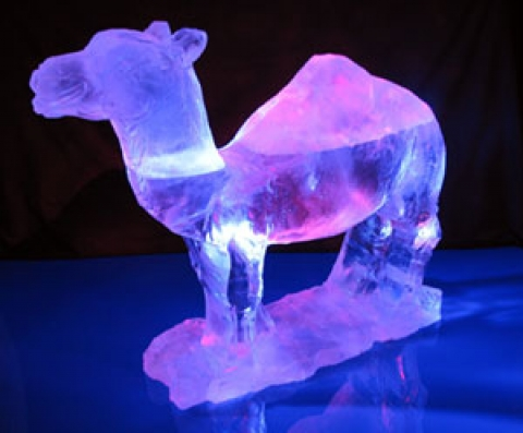 Camel Standing Vodka Luge from Passion for Ice